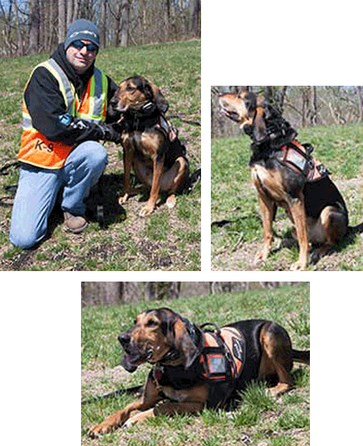 K9_Teams_Jake