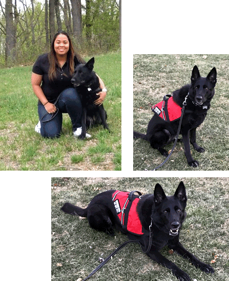 K9_Teams_Chyna